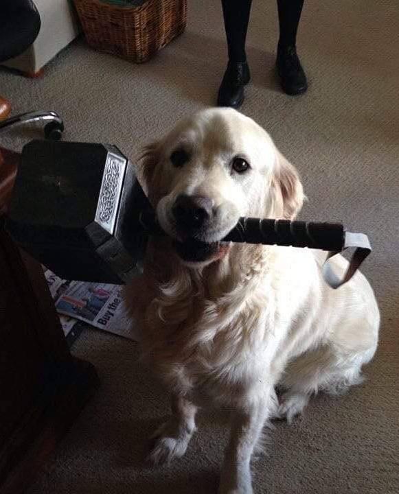 Dog-Thor